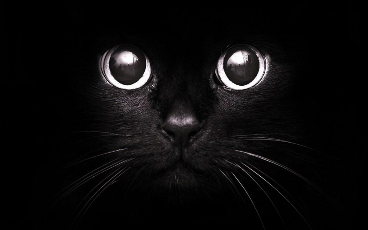 Buenas noches Blackcat