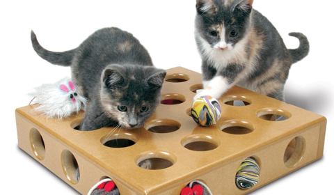 SmartCat products for smart pet owners