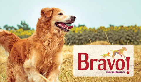 Bravo! Raw Diets
