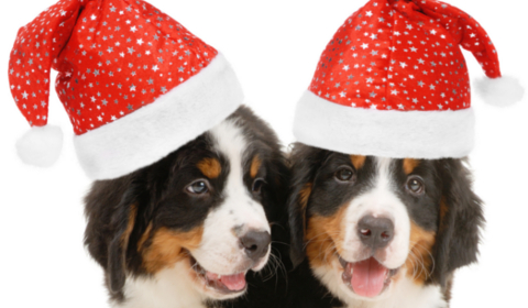 Great Holiday Pet Gifts