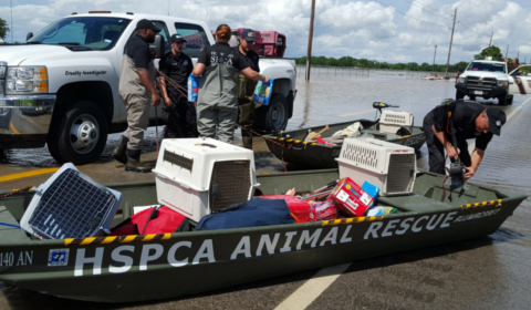 Phillips Pet Food and Supplies Comes Together with the Pet Industry in Hurricane Harvey Relief Efforts
