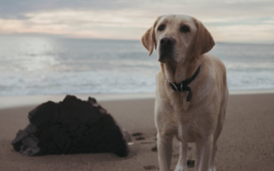 Hurricane Preparedness for Your Pets
