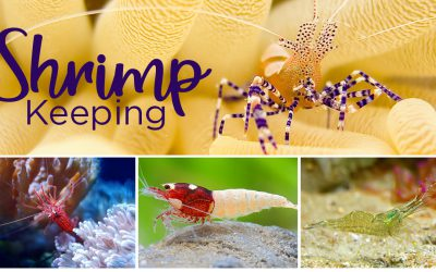 Get on Board with Freshwater Shrimp