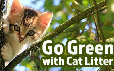 Going Green with Cat Litter