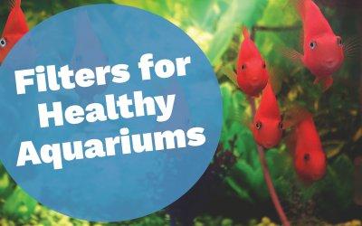 Aquarium Filters for Healthy Environments
