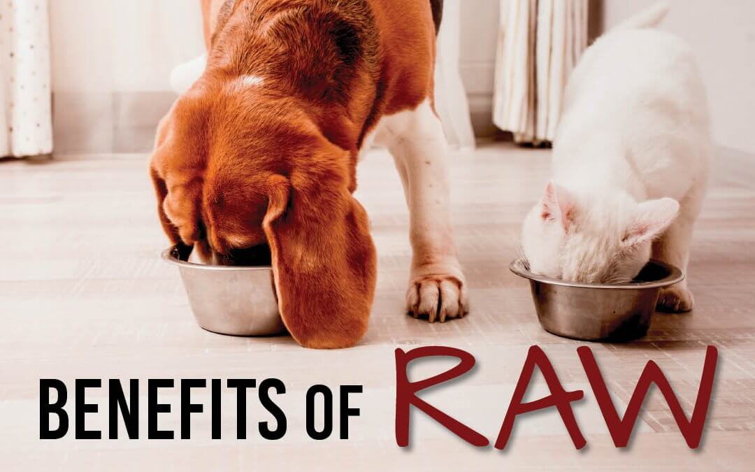 The Growing Appetite for Raw Pet Food
