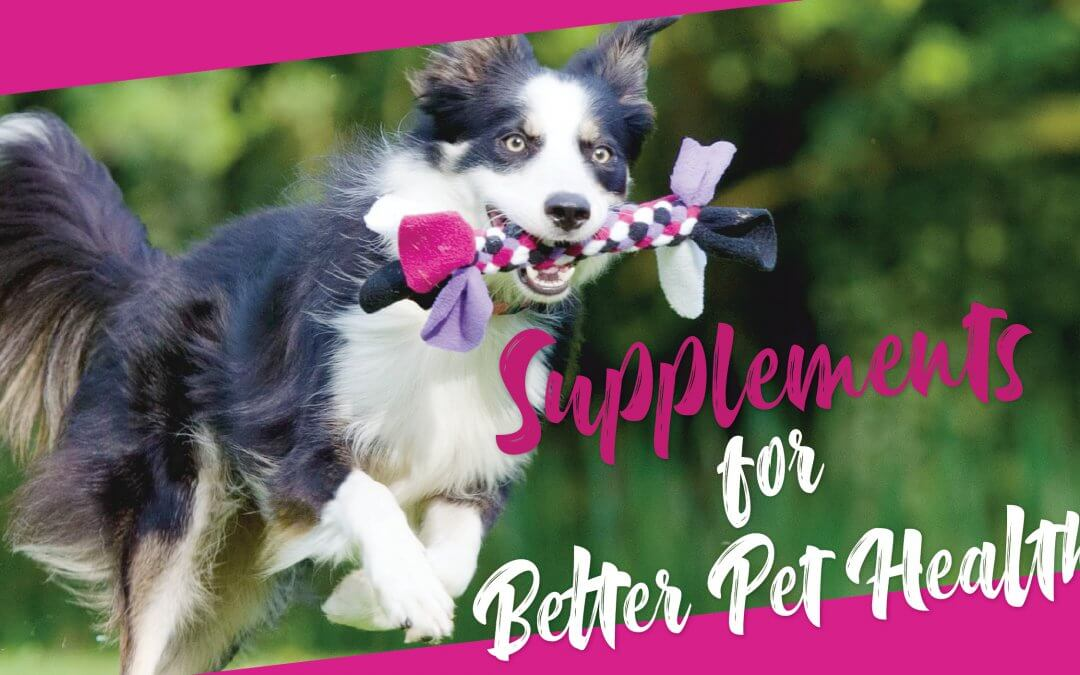Supplements for Better Pet Health