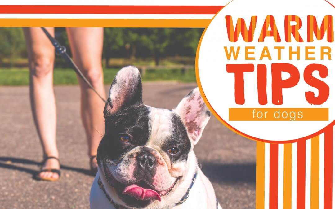 Warm Weather Tips for Dogs