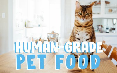 Human-Grade Pet Food