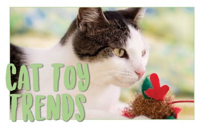 Cat Toy Trends